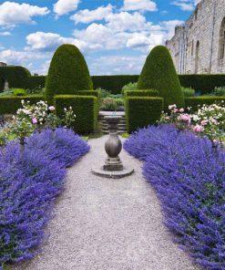 wallpaper-versailles-gardens-web