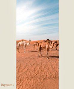 camels-web-1