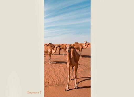 camels-web-2