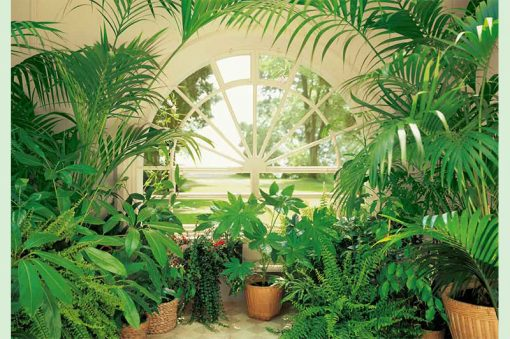 wallpaper-summer-garden-web