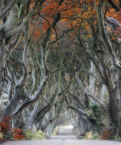 wallpaper-mystical-forest-web